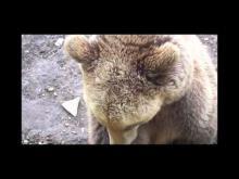Parc animalier de Gramat en vidéo