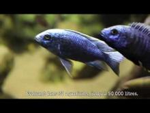 Aquarium des Tropiques en vidéo