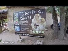 Forêt des Singes en vidéo