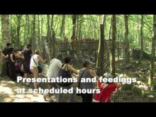 La Maison des Loups en vidéo
