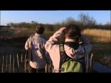 Parc Ornithologique du Marquenterre en vidéo