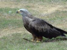 Le Jardin aux Oiseaux (zoo de Upie) en vidéo