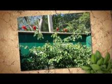 Parc Zoologique de Champrépus en vidéo