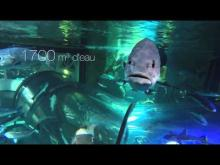 Océarium du Croisic en vidéo