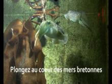Aquarium Marin de Trégastel en Vidéo