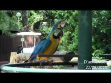 Parc zoologique d'Amnéville en vidéo