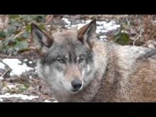Nocturnia - Parc Argonne Découverte en vidéo