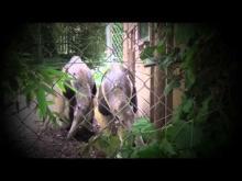 Zoo des Sables-d'Olonne en vidéo