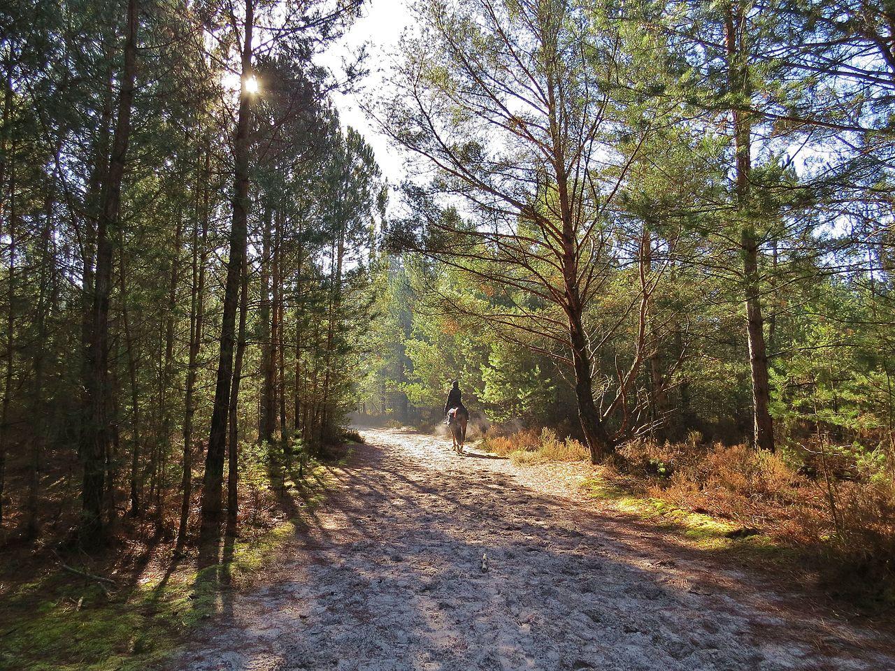Parc naturel régional du Gâtinais By Cecile Petit CC BY-SA 4.0 via Wikimedia Commons