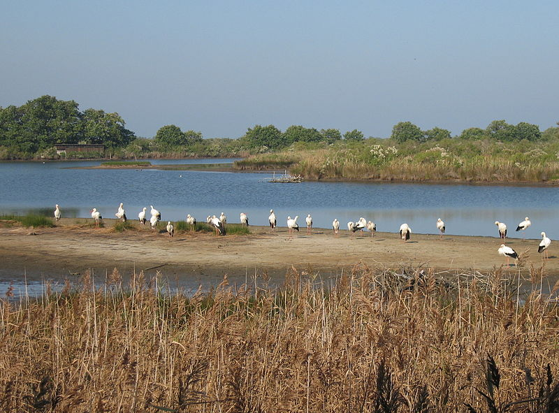 Parc Ornithologique du Teich By Pline (Own work) CC BY-SA 2.5-2.0-1.0via Wikimedia Commons