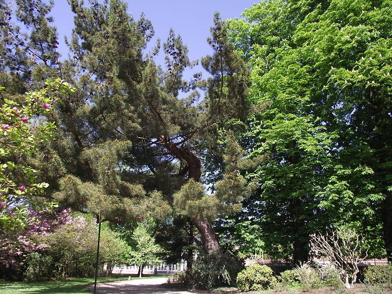 Jardin des Plantes de Rouen By Titicanar via Wikimedia Commons