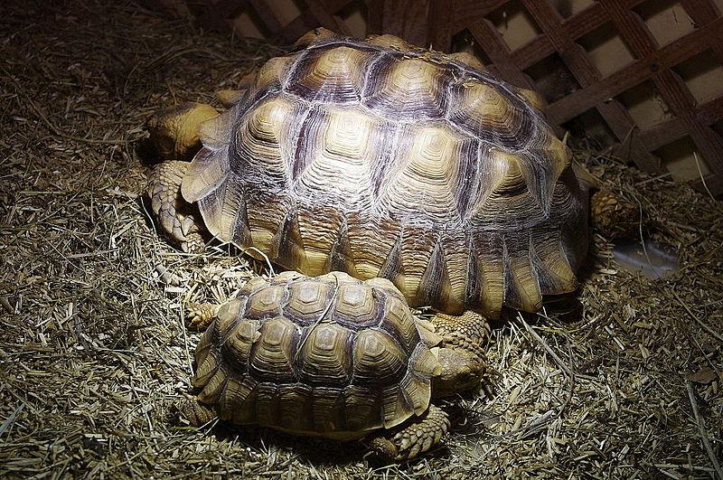 Reptiland © Traumrune, via Wikimedia Commons