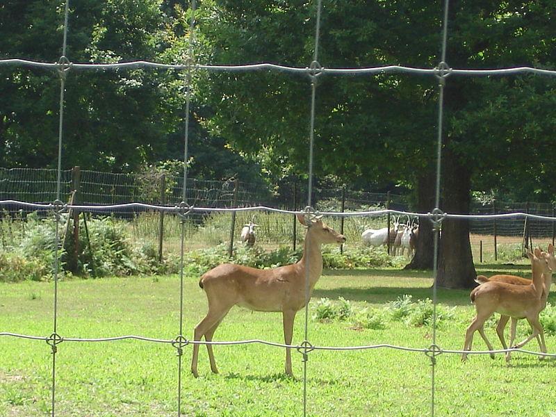 Parc animalier de la Haute Touche By Floppy36 CC BY-SA 3.0 via Wikimedia Commons