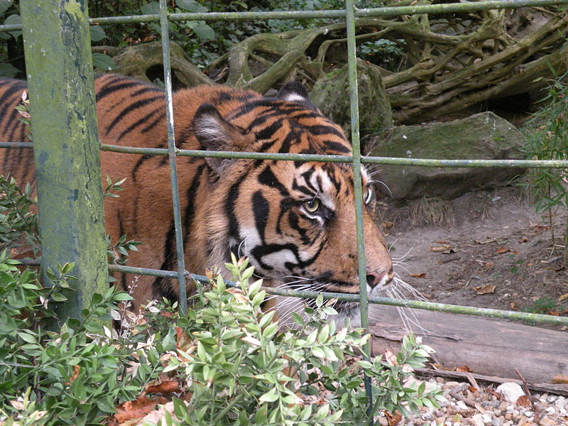 ZooParc de Beauval By Chatsam (Own work) CC BY-SA 3.0 via Wikimedia Commons