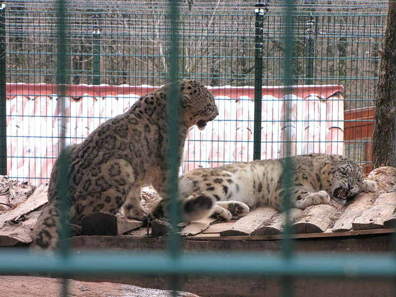 Zoo des 3 vallées By Mathieu MD (Own work) CC BY-SA 3.0 via Wikimedia Commons