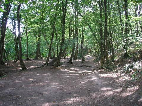 Paimpont et la forêt de Brocéliande By Suzelfe CC BY-SA 3.0 via Wikimedia Commons