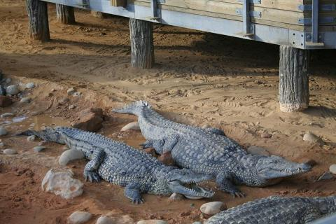 La Ferme aux Crocodiles Par davric (Travail personnel) [Public domain], via Wikimedia Commons