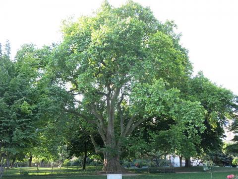 Parc Monceau By Tangopaso ([Public domain], via Wikimedia Commons