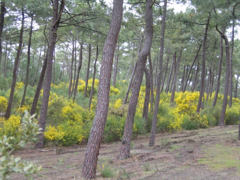 La Forêt de la Coubre