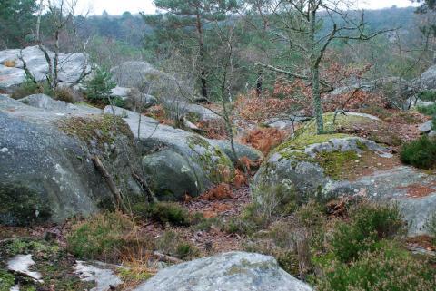 Forêt de Fontainebleau. Gorges de Franchard