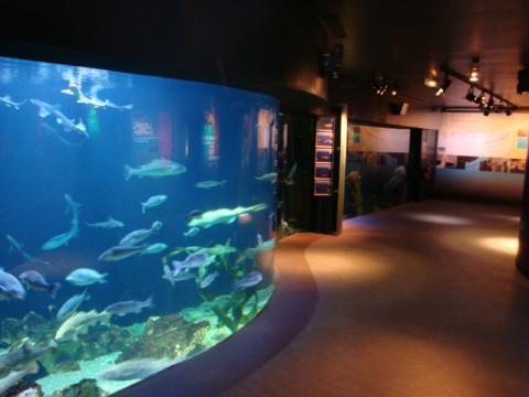 Maréis, Centre de découverte de la pêche en Mer By Bathynome (Own work) [Public domain], via Wikimedia Commons