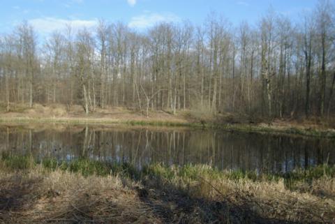 La Forêt de L'Hautil
