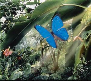 Naturospace photo de ot-honfleur.fr
