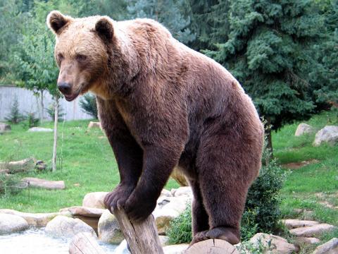 Parc animalier des Pyrénées By Jean-noël Lafargue [FAL], via Wikimedia Commons