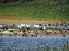 Parc Ornithologique du Marquenterre Par Alf van Beem (Travail personnel) [CC0], via Wikimedia Commons