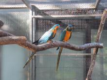 Parc Zoologique et Botanique de Mulhouse By Arnaud 25 (Own work) CC BY-SA 3.0 via Wikimedia Commons