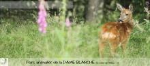 Parc animalier de la Dame Blanche