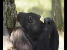 la Vallée des Singes en vidéo