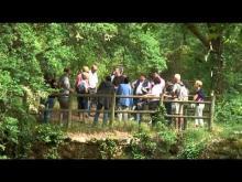 Phosphatières du Cloup d'Aural en vidéo