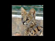 Zoo du Mont Faron en Vidéo