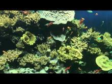 Musée océanographique de Monaco en vidéo