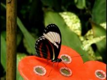 Naturospace en vidéo