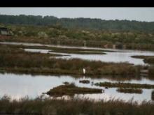 Parc Ornithologique du Teich en vidéo