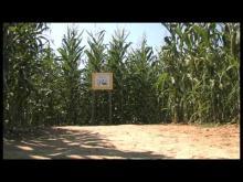 Dédale Jeux Labyrinthe Végétal en vidéo