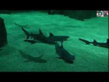 Musée de la Mer à Biarritz (Aquarium) en vidéo