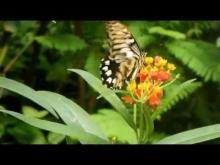 Le Jardin aux Papillons en vidéo