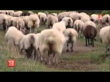 Parc naturel régional des Volcans d'Auvergne en vidéo