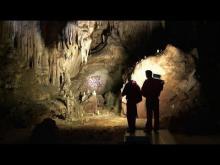 Grotte ornée du Pont d'Arc en Vidéo