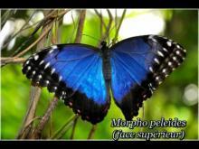 Au Paradis du Papillon en vidéo
