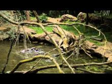 Bioparc de Doué la Fontaine en vidéo