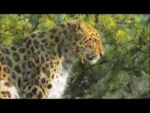 Parc Zoologique et Botanique de Mulhouse en vidéo