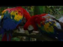 Zoo African safari de Plaisance-du-Touch en vidéo
