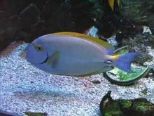 Aquarium du Limousin en vidéo
