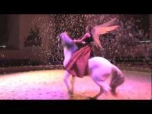 Musée vivant du cheval de Chantilly en vidéo
