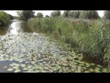Réserve naturelle du Romelaere en vidéo