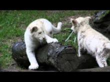 Zoo de La Flèche en vidéo